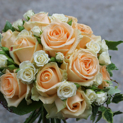 250x250_189-bouquet_rose_rid
